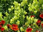 Descanso Gardens 049