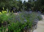Descanso Gardens 071