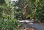 Descanso Gardens 082