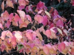 Fall colors seqoia 28 oct 2017191