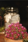 small flower by shells inbottle