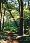 trail shady