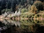 trees reflecting